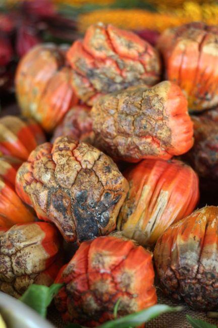 Pandanus nuts